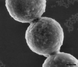 Artificial Antibody on Silica Nanoparticle